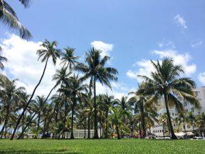 Miami south beach palm trees blue sky