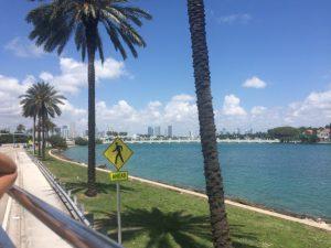 miami palm tree sea