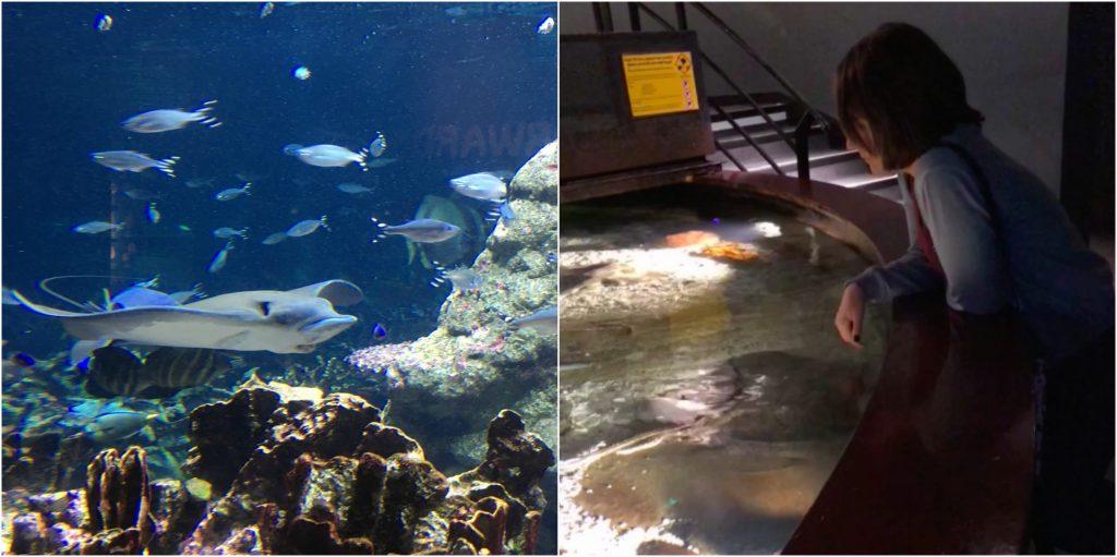 cite de la mare aquarium stingray