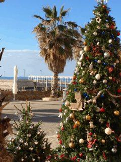 civitavecchia christmas day cruise rome msc meraviglia