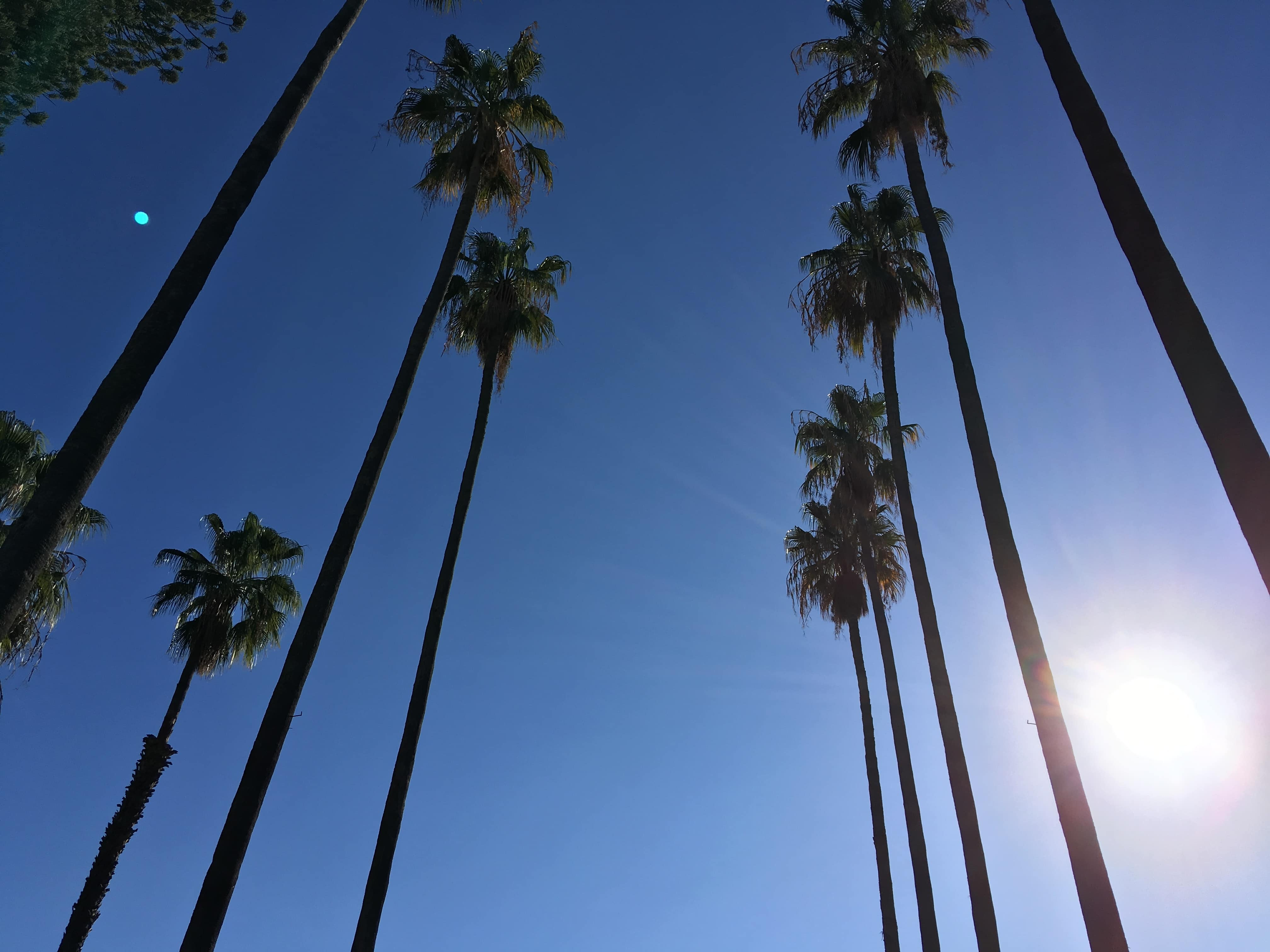 palm trees and blue skies!