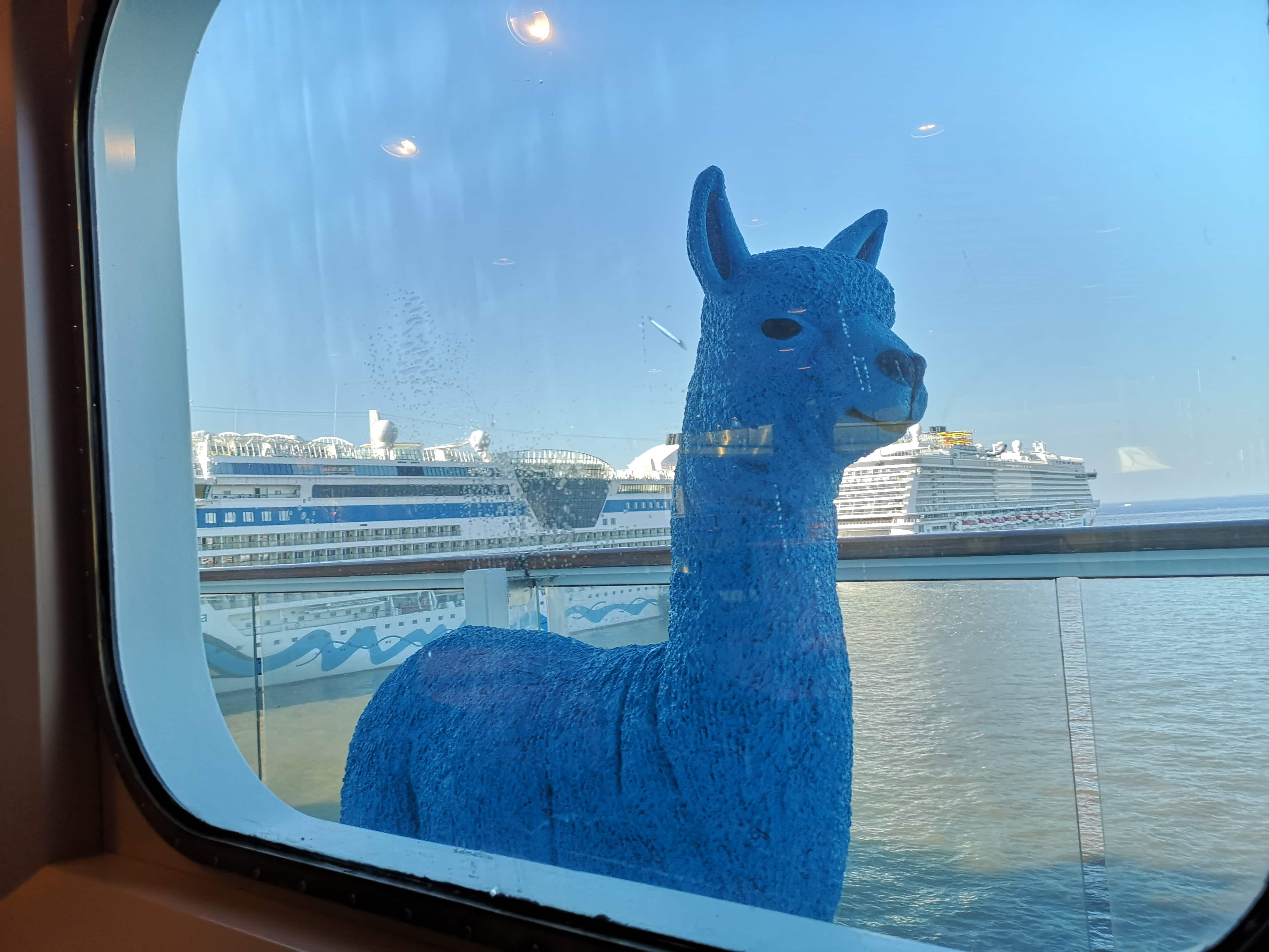 Marella Discovery Blue Llama Alpaca  Coffee Port